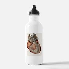 Heart anatomy, 19th Ce Water Bottle