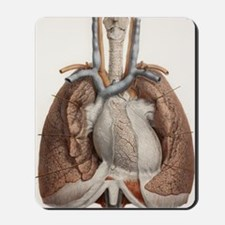 Heart and lungs, historical illustration Mousepad