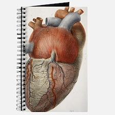 Heart anatomy, 19th Century illustration Journal