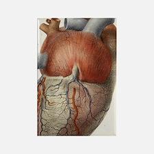 Heart anatomy, 19th Century illus Rectangle Magnet