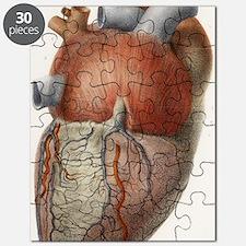 Heart anatomy, 19th Century illustration Puzzle