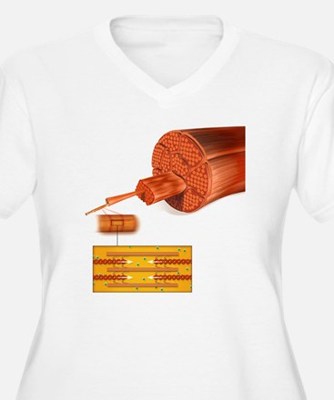 Muscle structure, T-Shirt