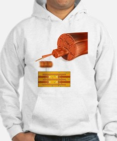 Muscle structure, artwork Hoodie