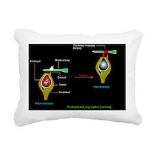 Volvent nematocyst, artw Rectangular Canvas Pillow