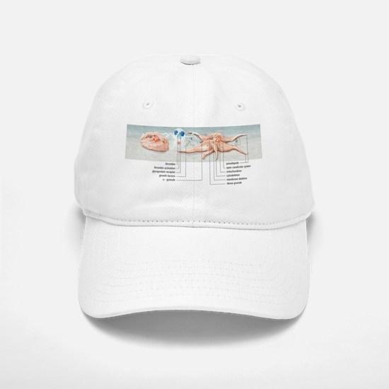 Platelet activation, artwork Baseball Baseball Cap