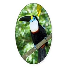 White-throated toucan Decal