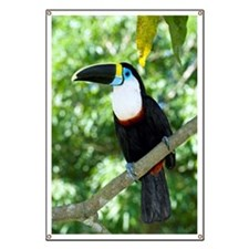 White-throated toucan Banner