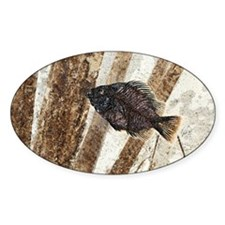 Priscacara fossil fish Decal