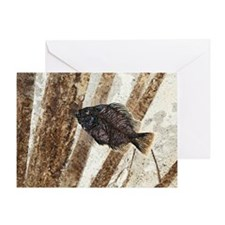 Priscacara fossil fish Greeting Card