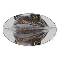 Common frog spawning Decal