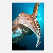 Broadclub cuttlefish Postcards (Package of 8)