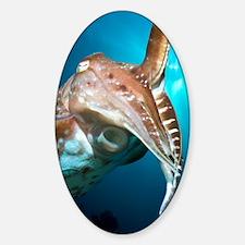 Broadclub cuttlefish Decal