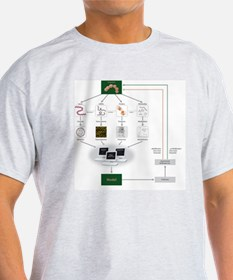 Systems biology, flow chart T-Shirt