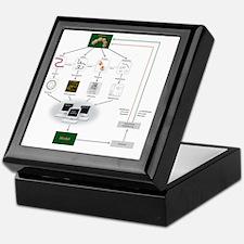 Systems biology, flow chart Keepsake Box