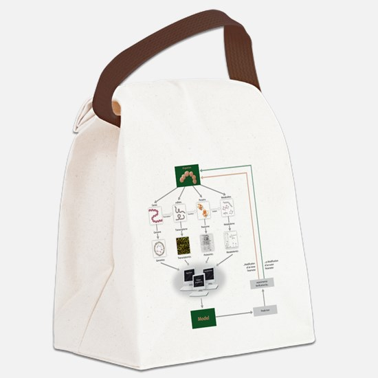 Systems biology, flow chart Canvas Lunch Bag