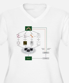 Systems biology,  T-Shirt