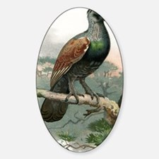 Capercaillie, historical artwork Sticker (Oval)