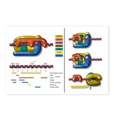 Transcription initiation  Postcards (Package of 8)