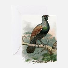 Capercaillie, historical artwork Greeting Card