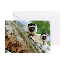 Verreaux's sifaka lemurs Greeting Card