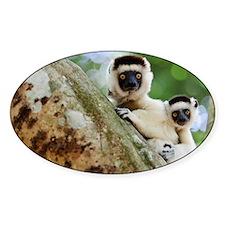 Verreaux's sifaka lemurs Decal