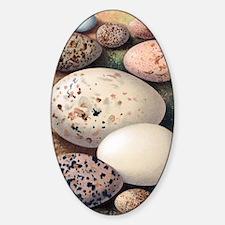 Assorted birds' eggs, historical ar Decal