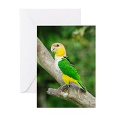 White-bellied parrot Greeting Card