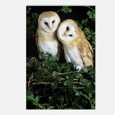 Barn owls Postcards (Package of 8)