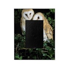 Barn owls Picture Frame
