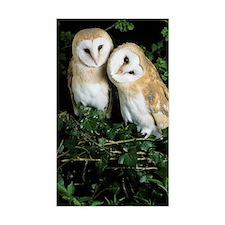 Barn owls Decal