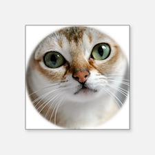 "Singapura Cat Square Sticker 3"" x 3"""