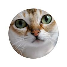"Singapura Cat 3.5"" Button"
