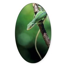 Green anole Decal