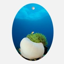 Magnificent sea anemone Oval Ornament