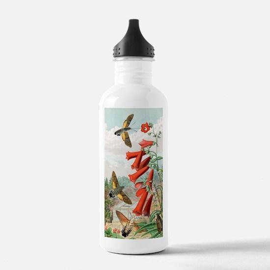 Hawkmoths, historical  Water Bottle