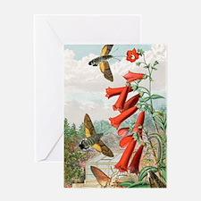Hawkmoths, historical art Greeting Card