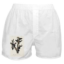 Ivory-billed woodpeckers, artwork Boxer Shorts