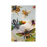 Hymenoptera Magnets