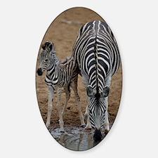 Burchell's zebra with foal Sticker (Oval)
