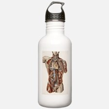 Cardiovascular system, Water Bottle