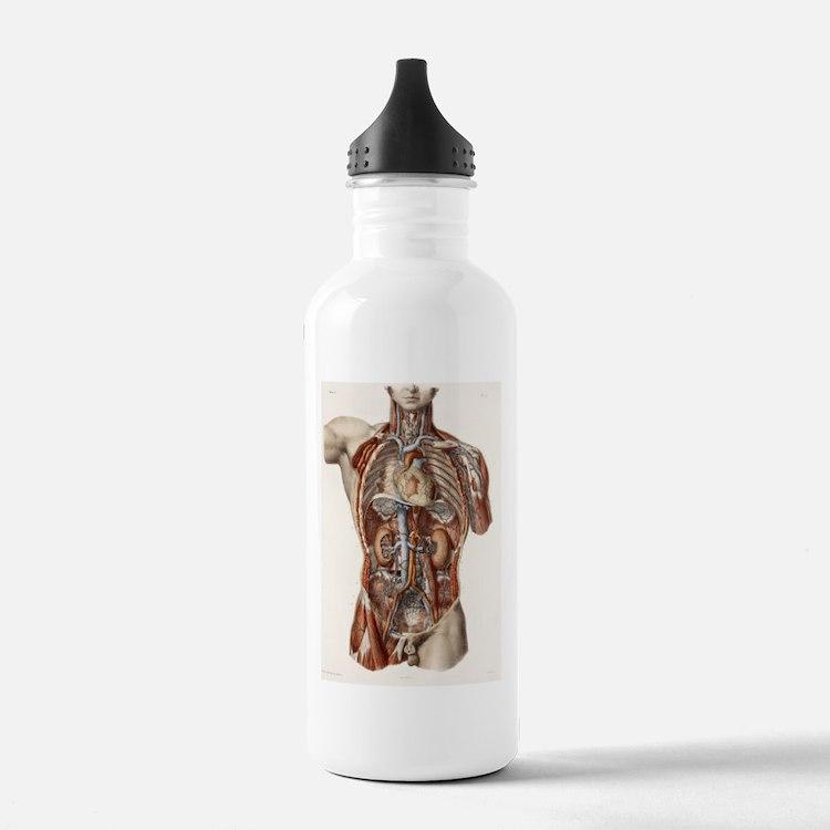 Cardiovascular system, Water Bottle