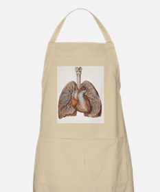 Heart and lungs, historical illustration Apron