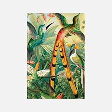 Hummingbirds, historical artwork Rectangle Magnet