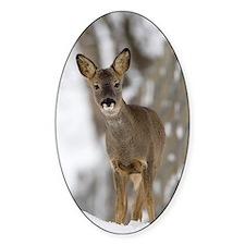 Roe deer Decal
