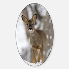 Roe deer Sticker (Oval)
