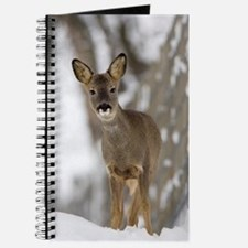 Roe deer Journal