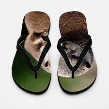 Oriental small-clawed otter Flip Flops