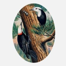White-headed woodpeckers Oval Ornament