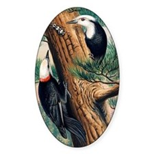White-headed woodpeckers Decal