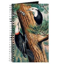 White-headed woodpeckers Journal